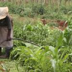 Corso sulla Sovranità Alimentare