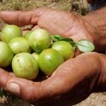 Sovranità alimentare, una carta dal territorio fiorentino