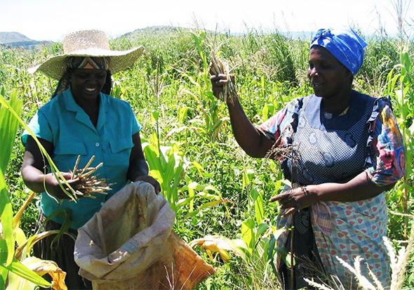 Terre del Cibo - Swaziland - COSPE